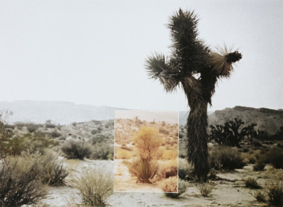 Stig Brøgger. Mutations (Bushes, Nevada), 1969